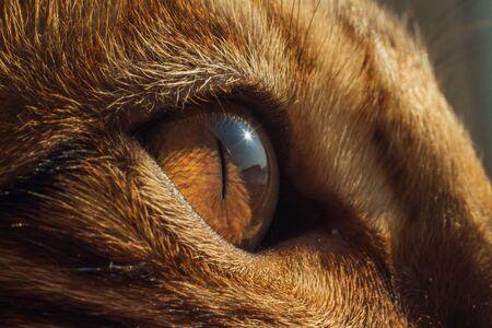 Cats eye ultra close up. Macro image of a yellow eye of a bengal cat. Stok Fotoğraf