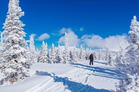 Esquiador hombre cabalga en un bosque de invierno. Hermoso paisaje invernal con árboles de piel coveres con nieve blanca sobre el fondo de cielo azul en un día soleado de invierno Foto de archivo