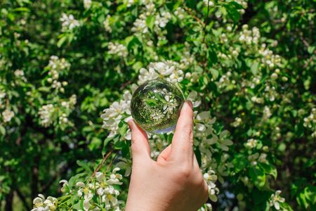 Crystal lens ball in hand with reflection blooming apple tree with white flowers Banque d'images - 140908779
