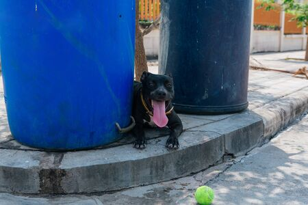 Happy smiling young black Pitbull dog laying in a shade between two blue trash cans playing with green tennis ball Foto de archivo