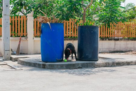 Happy smiling young black Pitbull dog in a shade between two blue trash cans playing with green tennis ball Foto de archivo
