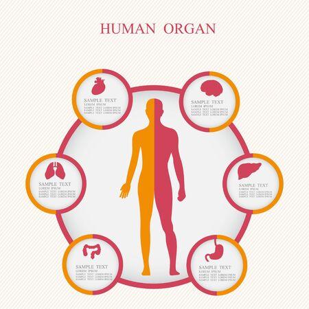 illustration of medicine infographics. Schematic description of the human body. Illustration
