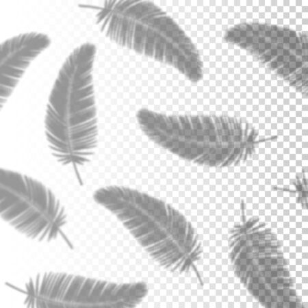 Transparent Shadow Overlay Effect Palm Leaves for Branding. Creative Overlay Effect for Mockups. Vector illustration