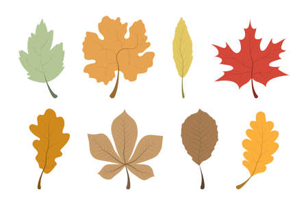 Autumn Leaves. Leaves collection. Leaf vector icons, isolated. Template autumn leaves in a row. Vector illustration