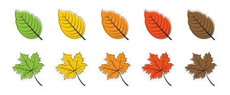 Leaves. Season leaf. Leaves different color, isolated. Leaf vector icons. Vector illustration