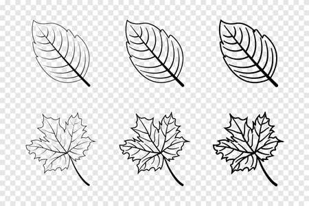 Leaf in line design. Leaves. Autumn leaves in different lines. Leaf vector icons. Vector illustration