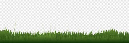 Grass border in a row. Panorama view. Green Grass, isolated on transparent background. Vector illustration