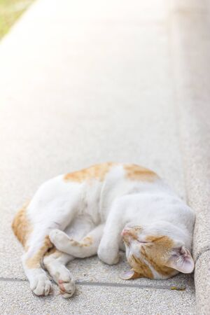 A white and yellow cat sleeping outside on cement floor
