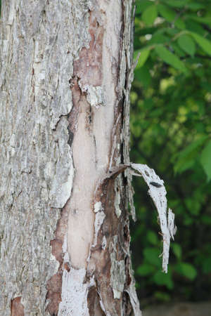 Tree bark with insect Stock Photo