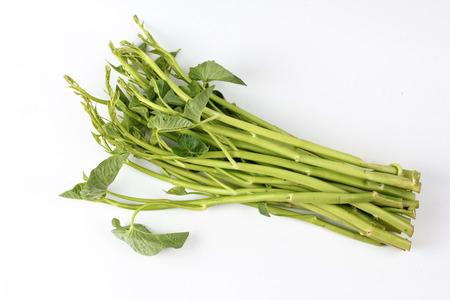 야채, 중국 나팔꽃 흰색 배경에 고립입니다. 스톡 콘텐츠