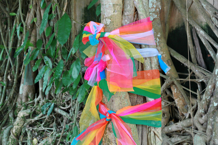buena salud: Buddhist culture : Seven (color of week ) sacred cloth tied around a tree in the temple for good health. (7 see 7 sok of sacred cloth)
