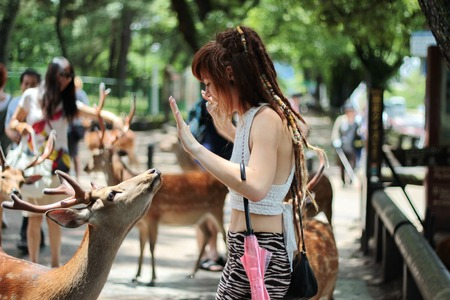Nara,June 26,Tourists enjoy the cookies with deer on sideway,Nara,Japan, on June 26,2016 Editorial