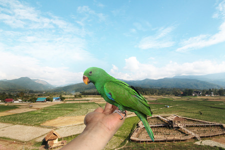 Parrot on hand ,View fields and sky,two months of Male Eclectus Parrot. Stock Photo