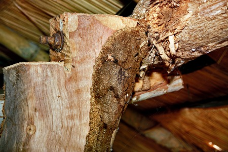 invade: Wood termites to invade the building. And expanded