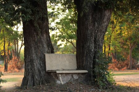 meant to be: Stone bench placed between the trees in long time.  Even linked by a termite nest in the morning light is meant to be different, the team together. Backgroud for photo Stock Photo