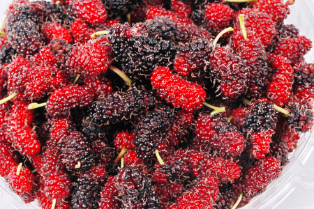Fresh black and red ripe mulberries keep from the garden on white background.