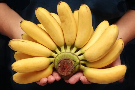 Egg-banana  or Pisang mas is  famous fruit of North Thailand.