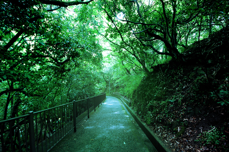 Corridor containing the tree up density within the National Park, see the shady at  Nunobiki waterfalls in Kobe, Japan.