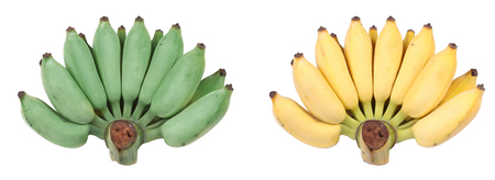 Isolated of compare with green  cultivated banana,yellow  cultivated banana on white background. 免版税图像