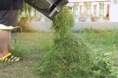 Pour the grass is cut short to keep it out of the box in the mower. Pour into  pile together