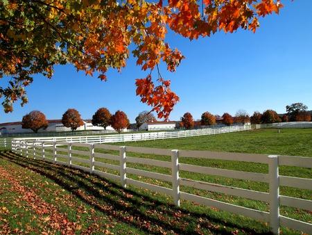 autumn foliage in countryside scene