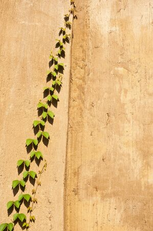 splotchy: Vine on the wall