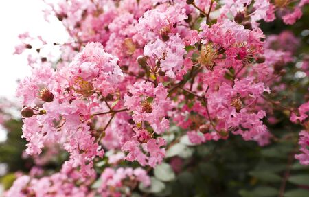 plentifully: Pink flowers Stock Photo