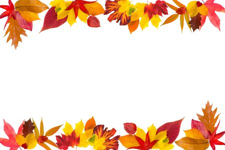 Colorful border composed of multiple autumn leaves Stock Photo - 3937178