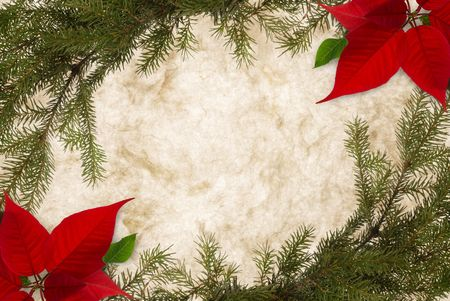 bordered: Classical Christmas background on parchment, bordered with fir twigs and poinsettia Stock Photo