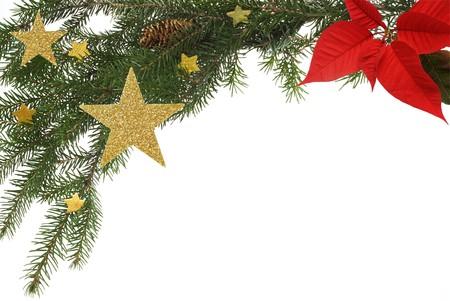 flor de pascua: Chistmas de tarjetas de felicitaci�n de fondo, que limita con ramitas de abeto, las estrellas y Poinsettia