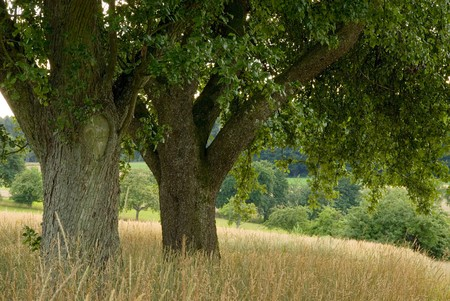 shadowy: Nice shadowy place under apple trees