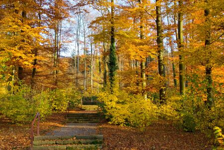 walking path: Walking path in a park in fall, vibrant colors