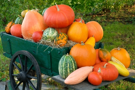 wagon: Colorful pile of different pumpkins on a vintage cart