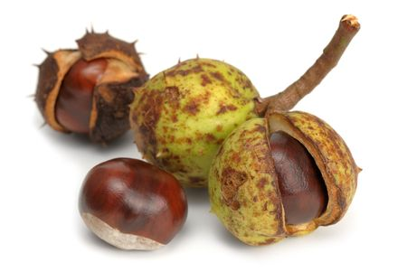 buckeye seed: Studio shot of four chestnuts as they look in nature
