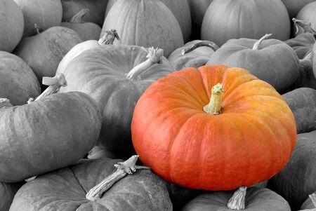 A Vibrant pumpkin on top of a heap of black-and-white ones Stock Photo