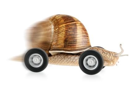 babosa: Caracol rápida sobre ruedas, con el desenfoque de movimiento parcial y un fondo blanco  Foto de archivo