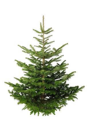Tanne Weihnachten nicht geschmückt, isoliert auf weiss ohne Schatten Standard-Bild