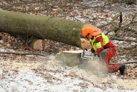 lumberman: Lumberman working on an already cut tree trunk with a chainsaw Stock Photo