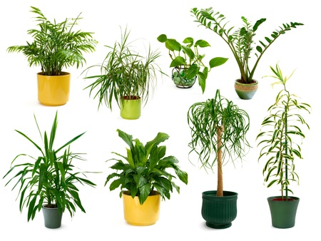 plant pot: Collection of eight different studio-isolated shots of gorgeous indoor plants
