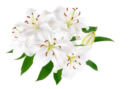 Isolated bright studio shot of a bunch of large white lilies with leaves Stock Photo - 9956644