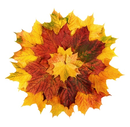 Studio shot of colorful autumn leaves arranged as a circle to resemble a flower Stock Photo - 10099863