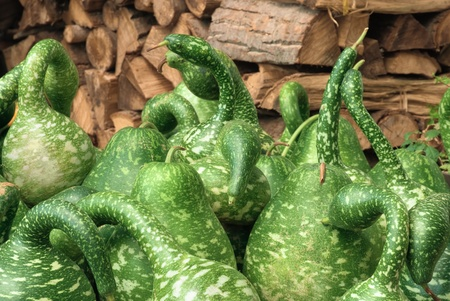 buckled: Spotted ornamental green pumpkins with a nice background of firewood
