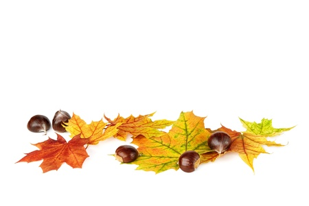 Arrangement of autumn leaves and chestnuts on white background with lots of copy space Stock Photo - 10200491
