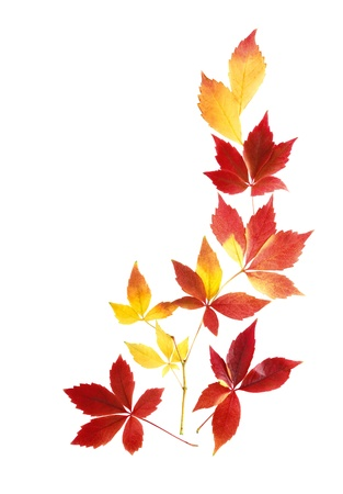 Neat arrangement of beautiful autumn leaves on white background