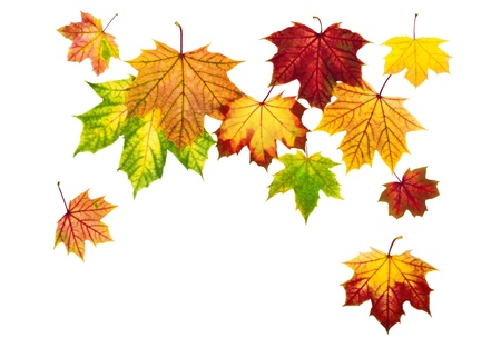 Multi-colored autumn leaves falling down, with white copy space