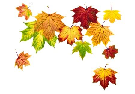 bladeren: Multi-gekleurde herfst bladeren vallen, met witte kopie ruimte
