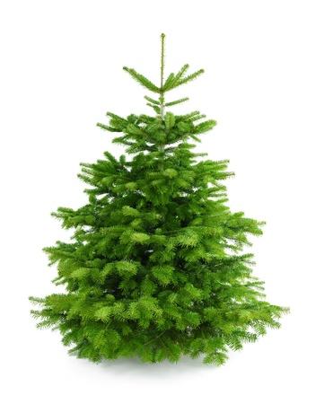 Foto de estudio de un árbol fresco magnífico de Navidad, sin adornos, aislados en blanco