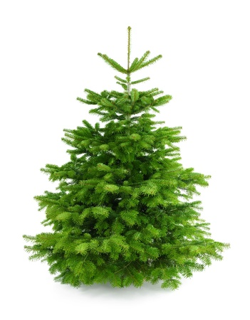 spar: Studio-opname van een verse prachtige kerstboom zonder versieringen, geïsoleerd op wit
