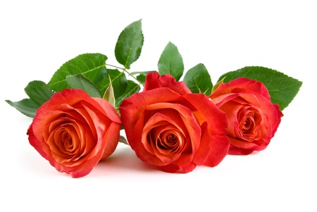 Three stunning red roses with leaves lying on white background Stock Photo