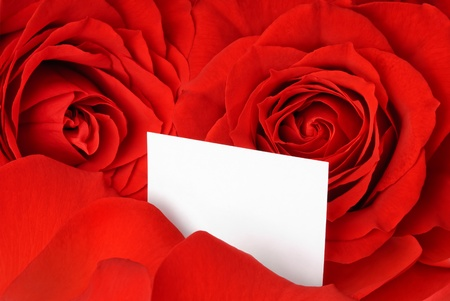 Closeup of gorgeous red roses and petals and an empty white card for a loving message photo